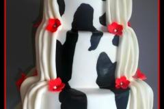 cow-w-cake-ma